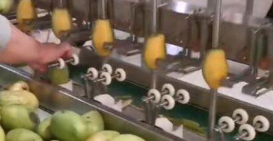 强得力伺服电动缸在自动果蔬削皮机上的运用案例